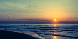 Havsoluppgång eller solnedgång med flygseagulls Royaltyfria Bilder