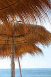 havsparasoller Royaltyfri Fotografi