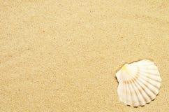 Havssand med snäckskalet Bästa sikt med kopieringsutrymme royaltyfria foton