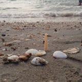 Havssandskal Arkivfoto