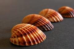 havssheels Arkivfoton