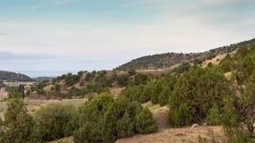 Havssikt från kullen i sommar fotografering för bildbyråer