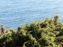 Havssikt från kullen solig stranddag Natur vid havet ovanför havssikt Arkivfoto