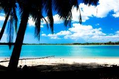 Havssikt med en kokospalm Arkivfoton