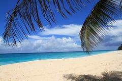 Havssikt med palmblad på en solig dag Arkivfoton
