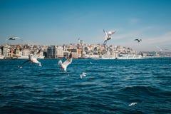 Havssikt med seagulls och skepp i Istanbul Royaltyfria Foton