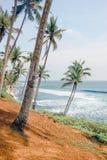 Havssikt på kokospalmkullen arkivfoto