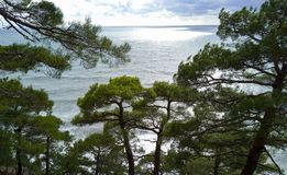 Havssikt till och med gröna kronor av träd arkivfoton