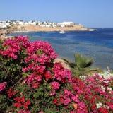 Havssikten och bougevilleaen, Sharm el Sheikh, Egypten Arkivfoton