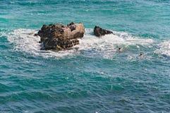 havssimning Arkivbild