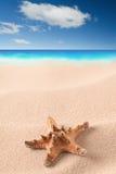 Havssjöstjärna på den sandiga stranden royaltyfri foto
