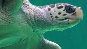 Havssköldpadda Marine Life Arkivfoton