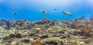 Havssköldpadda och många fisk på den tropiska reven under vatten Arkivfoton
