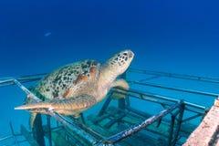 Havssköldpadda på en liten haveri arkivfoton