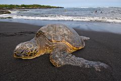 Havssköldpadda på strand Royaltyfri Bild