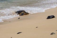 Havssköldpadda som surfar på stranden royaltyfria bilder