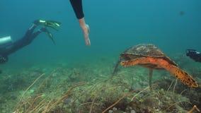 Havssköldpadda under vatten stock video