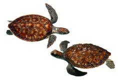 havssköldpaddor Royaltyfri Bild