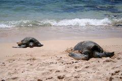 havssköldpaddor royaltyfria bilder