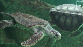 Havssköldpaddor och annan Marine Life Royaltyfria Bilder