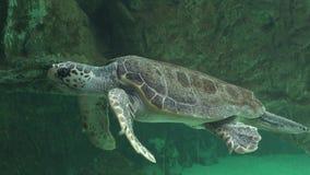 Havssköldpaddor och annan Marine Life Royaltyfri Bild