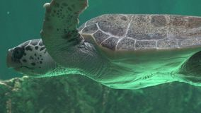 Havssköldpaddor och Marine Life Fotografering för Bildbyråer