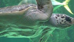 Havssköldpaddor och Marine Life Royaltyfri Bild