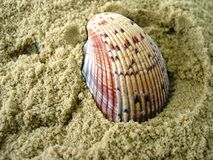 havsskal Fotografering för Bildbyråer