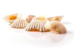 havsskal Arkivbild