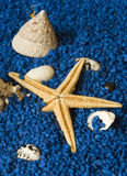 havsskal Royaltyfria Bilder
