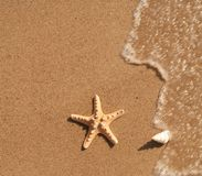 havsskal Royaltyfri Fotografi