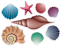 havsskal vektor illustrationer