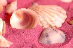 havsskal Arkivbilder