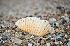 havsskal för 3 strand Royaltyfri Fotografi