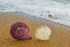 Havsskal i sanden 10 Arkivfoton