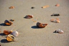 Havsskal med sanden Royaltyfri Fotografi
