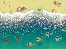 Havsskal och fiskar på stranden Royaltyfri Fotografi