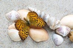 Havsskal och fjäril på sand arkivbilder