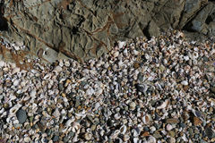Havsskal och kiselstenar på en strand Royaltyfri Foto