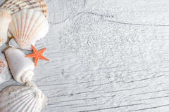Havsskal och orange havsstjärna Royaltyfri Foto