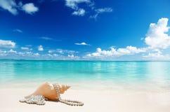 Havsskal och perls Arkivbild