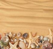 Havsskal och sand Royaltyfri Foto