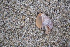 Havsskal och sand Arkivbild