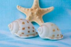 Havsskal och sjöstjärna på blå bakgrund Arkivbild