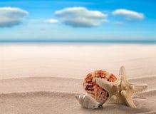 Havsskal och sjöstjärna på en vit strand av en tropisk paradisö royaltyfria foton
