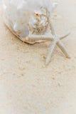 Havsskal och sjöstjärna på tropisk strand- och havsbakgrund Arkivfoto