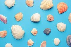Havsskal på blå bakgrund Fotografering för Bildbyråer