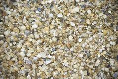 Havsskal på en strand Royaltyfria Foton