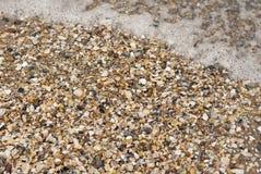 Havsskal på en strand med vågen Royaltyfria Bilder