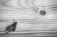 Havsskal på en trätabell Royaltyfri Foto